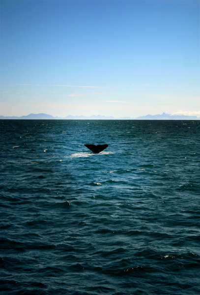 Norway Whale Safari