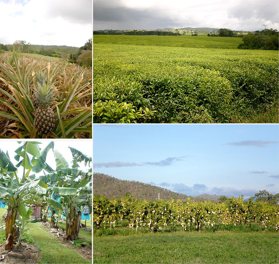 Früchte und Plantagen